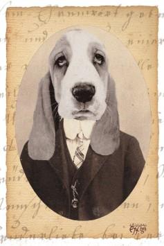 Il cane snob